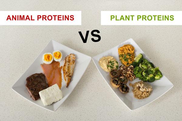 how much protein on a paleo diet